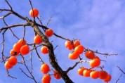 국악인이 추천하는 휴일의 詩 6 : 가을은 (김월준)