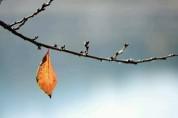 국악인이 추천하는 휴일의 시 10 : 초겨울 편지  (김용택)