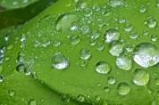 국악인이 추천하는 휴일의 시 25: 빗방울은 둥글다 (손동연)