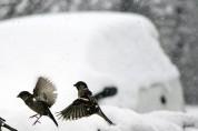 국악인 추천 휴일의 시 18: 새롭지 않은 새해의 시(이동순)